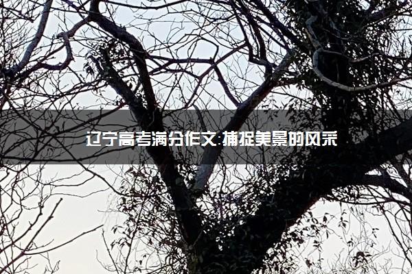 辽宁高考满分作文:捕捉美景的风采