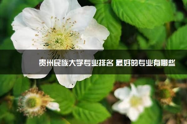 贵州民族大学专业排名 最好的专业有哪些