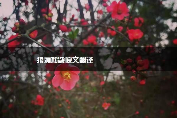 狼蒲松龄原文翻译