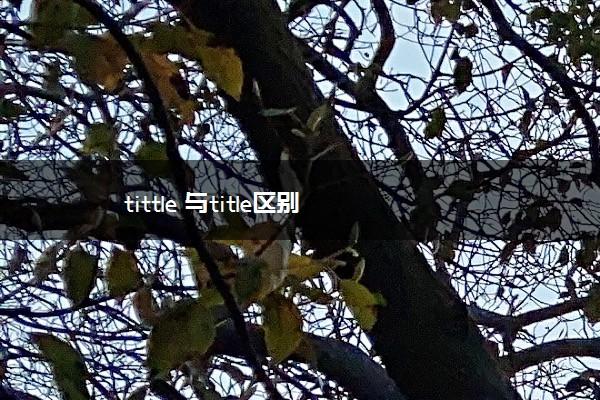 tittle 与title区别