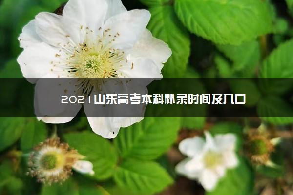 2021山东高考本科补录时间及入口