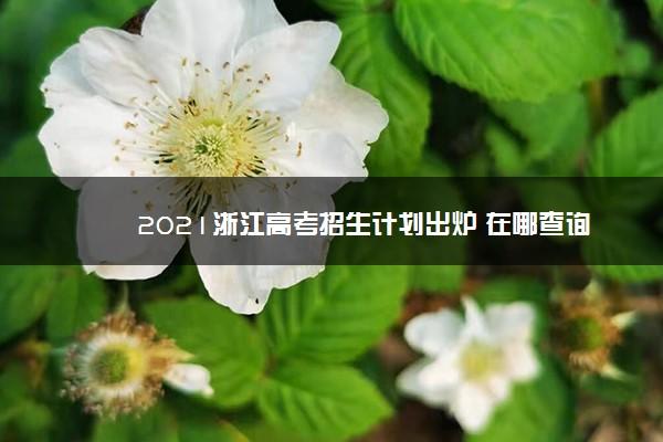 2021浙江高考招生计划出炉 在哪查询