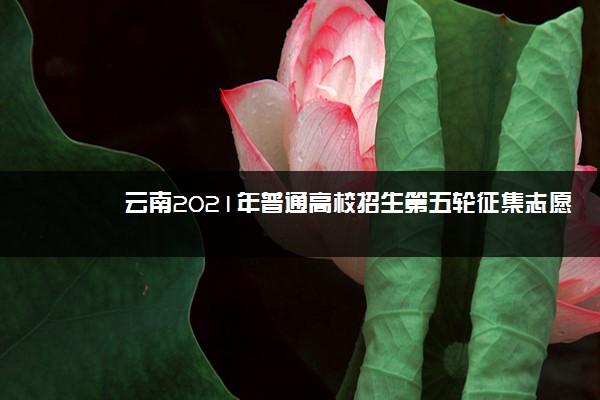 云南2021年普通高校招生第五轮征集志愿招生计划