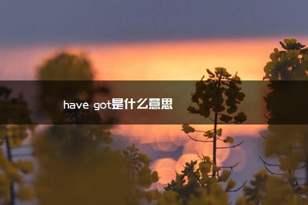 have got是什么意思